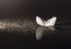 белизна пера мраморная Стоковая Фотография