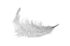 белизна пера пушистая Стоковая Фотография RF