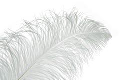 белизна пера светлая Стоковое Фото