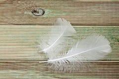 белизна пера Стоковое фото RF