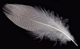 белизна пера Стоковое Фото