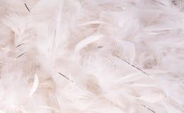 белизна пера Стоковые Изображения RF