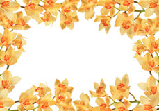белизна персика орхидей предпосылки померанцовая Стоковые Фотографии RF