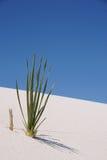 белизна песка Мексики новая Стоковые Изображения RF
