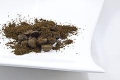 белизна плиты кофе Стоковая Фотография RF