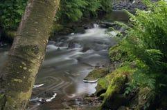 Белизна повернутая текущей водой milky долгой выдержкой по мере того как она пропускает вокруг зеленых и коричневых мшистых утесо стоковое изображение rf