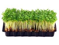 белизна подноса кресса изолированная садом Стоковое Изображение