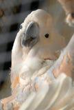 белизна попыгая Стоковая Фотография RF