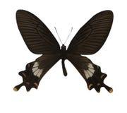 белизна предпосылки изолированная бабочкой стоковое фото rf