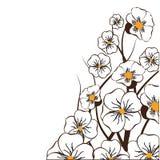 белизна предпосылки флористическая Стоковые Фотографии RF