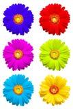 белизна предпосылки цветастым изолированная gerber Стоковое Изображение