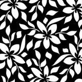 белизна предпосылки черная флористическая Стоковые Фото