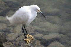 белизна птицы стоковая фотография rf