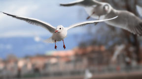 белизна птицы Стоковые Фотографии RF