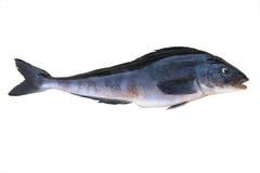 белизна путя клиппирования включенная рыбами изолированная Стоковая Фотография