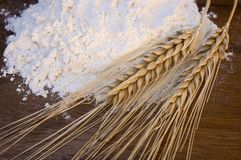 белизна пшеницы муки ушей Стоковые Изображения