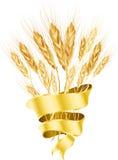 белизна пшеницы предпосылки Стоковые Фото