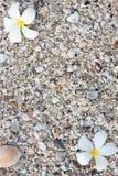 белизна раковины моря leelawadee Стоковое Изображение