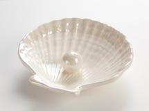 белизна раковины перлы Стоковое фото RF