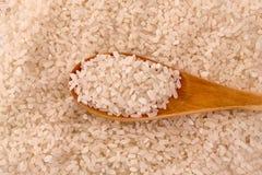 белизна риса круглая Стоковая Фотография