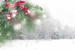 белизна рождества красная Стоковые Изображения RF