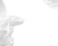 белизна рождества Стоковая Фотография RF