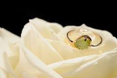 белизна розы кольца Стоковая Фотография RF