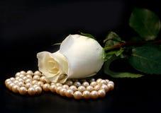 белизна розы перл стоковая фотография rf