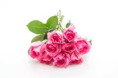 белизна розы пинка предпосылки Стоковое Фото