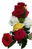 белизна розы предпосылки Стоковая Фотография