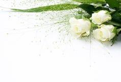 белизна розы рамки Стоковое Изображение