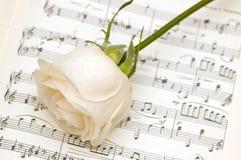 белизна розы страницы музыкальных примечаний Стоковая Фотография