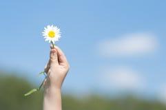 белизна руки s цветка ребенка Стоковое Фото