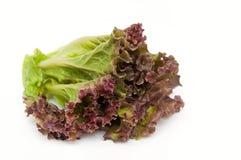 белизна салата предпосылки Стоковые Изображения