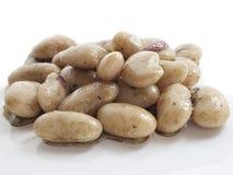 белизна салата фасоли Стоковые Фотографии RF