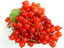белизна смородины красная Стоковое Изображение
