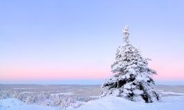 белизна снежка Стоковые Изображения