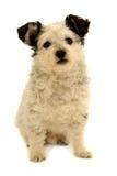 белизна собаки предпосылки малая Стоковая Фотография