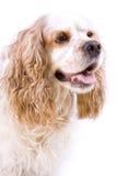 белизна собаки предпосылки милая Стоковое фото RF