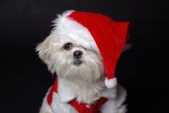 белизна собаки рождества Стоковое Изображение