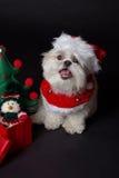 белизна собаки рождества Стоковые Изображения