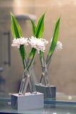 белизна спы цветка украшения Стоковые Изображения