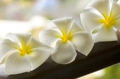 белизна спы цветка шара коричневая Стоковые Фото