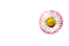 белизна стоцвета предпосылки Стоковая Фотография RF