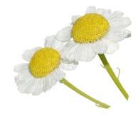белизна стоцвета Стоковое Фото