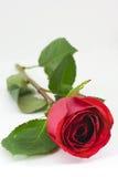белизна текста космоса красного цвета розовая стоковые фотографии rf