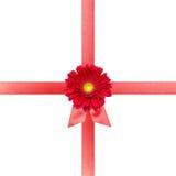 белизна тесемки цветка карточки красная Стоковое Изображение RF