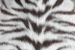белизна тигра кожи Стоковое фото RF