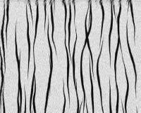 белизна тигра шерсти короткая Стоковая Фотография RF