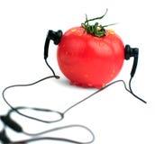 белизна томата предпосылки Стоковая Фотография RF